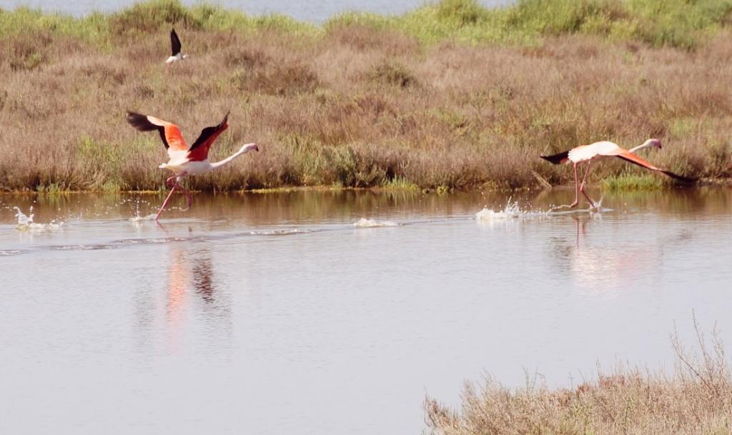 Oristano Birds